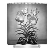 Vanda Orchids In Black And White Shower Curtain