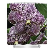 Vanda Orchids Shower Curtain