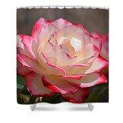 Vanilla Cherry Rose Shower Curtain