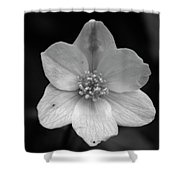 Vanishing Beauty 3 Shower Curtain