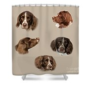 Variations Of A Spaniel Shower Curtain