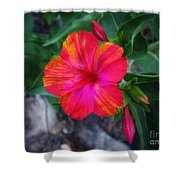 Variegated 4 O'clock Shower Curtain