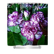 Variegated Carnations Shower Curtain