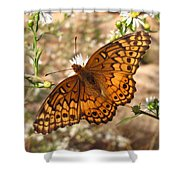 Variegated Fritillary Shower Curtain