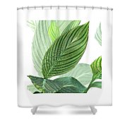 Variegated Shower Curtain
