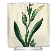 Variegated Iris Shower Curtain