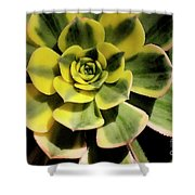 Variegated Succulent Shower Curtain