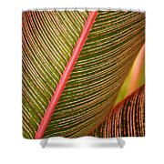 Variegated Ti-leaf 1 Shower Curtain by Ron Dahlquist - Printscapes