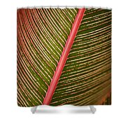 Variegated Ti-leaf 2 Shower Curtain