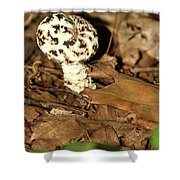 Varigated Mushroom Shower Curtain