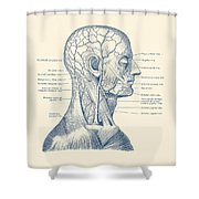 Vascular And Muscular System - Vintage Anatomy Print Shower Curtain