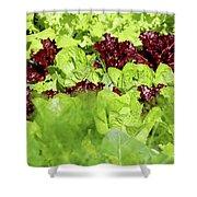 Vegetable Garden  Shower Curtain