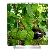 Vegetable Growing In Used Water Bottle 10 Shower Curtain