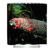Vegetable Not Animal  Shower Curtain