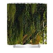 Vegetal Roof Shower Curtain