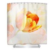Veiled Tulip Shower Curtain