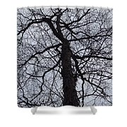 Veins And Vessels Shower Curtain