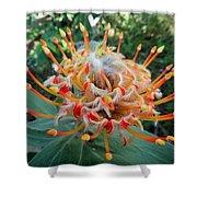 Veldfire Protea Shower Curtain
