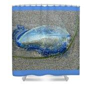 Velella Shower Curtain