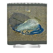 Velella With Shadow Shower Curtain