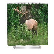 Velvet Never Looked So Good Shower Curtain