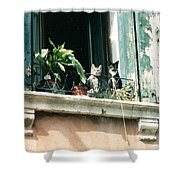 Venetian Cats Shower Curtain