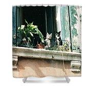 Venetian Cats Shower Curtain
