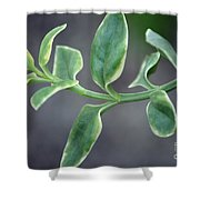 Verde Shower Curtain