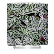 Verigated Green Leaves Shower Curtain