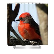 Vermilion Flycatcher Shower Curtain