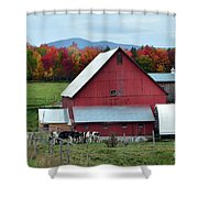 Vermont Cows At The Barn Shower Curtain