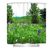 Vermont Lupine Shower Curtain
