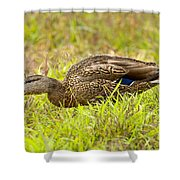 Vermont Mallard Portrait Shower Curtain