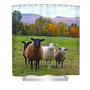 Vermont Sheep In Autumn Shower Curtain