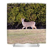 Vermont White-tailed Deer  Shower Curtain