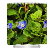 Veronica Speedwell Shower Curtain