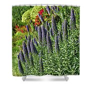 Veronica Spicata Royal Candles I Shower Curtain