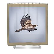 Vertical Eagle Triptych Shower Curtain