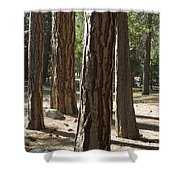 Vertical Of A Stand Of Ponderosa Pine Shower Curtain