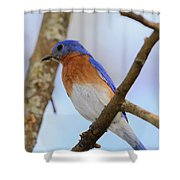 Very Bright Young Eastern Bluebird Perched On A Branch Colorful Shower Curtain