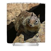 Very Cute Face Of A Wild Squirrel In California Shower Curtain