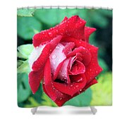 Very Dewy Rose Shower Curtain
