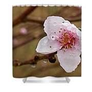 Very Early Peach Blooms Shower Curtain