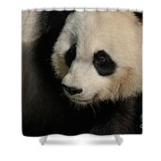 Very Fluffy Furry Face Of A Giant Panda Shower Curtain