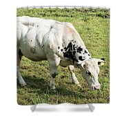Very Muscled Cow In Green Field Shower Curtain