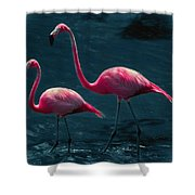 Very Pink Flamingos Shower Curtain