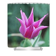 Very Pretty Blooming Pink Spikey Tulip Flower Blossom Shower Curtain