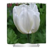 Very Pretty Blooming White Tulip In A Garden Shower Curtain