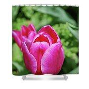 Very Pretty Dark Pink Tulip Flower Blossom Shower Curtain