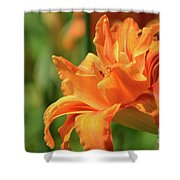 Very Pretty Double Orange Daylily Flowering In A Garden Shower Curtain